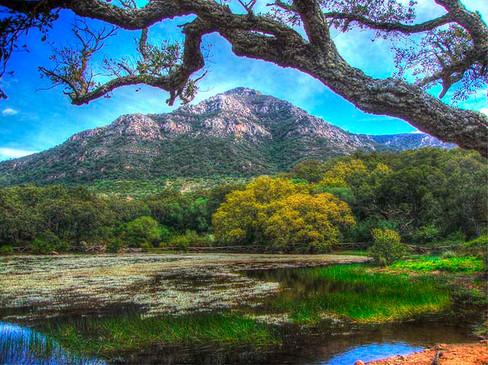 Parque Natural de los Alcornocales - El Picacho