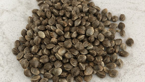 Germination- From Seeds To Weeds