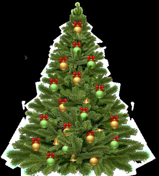 christmas-tree-1808558_1920.png