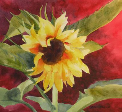 Door County Sunflower