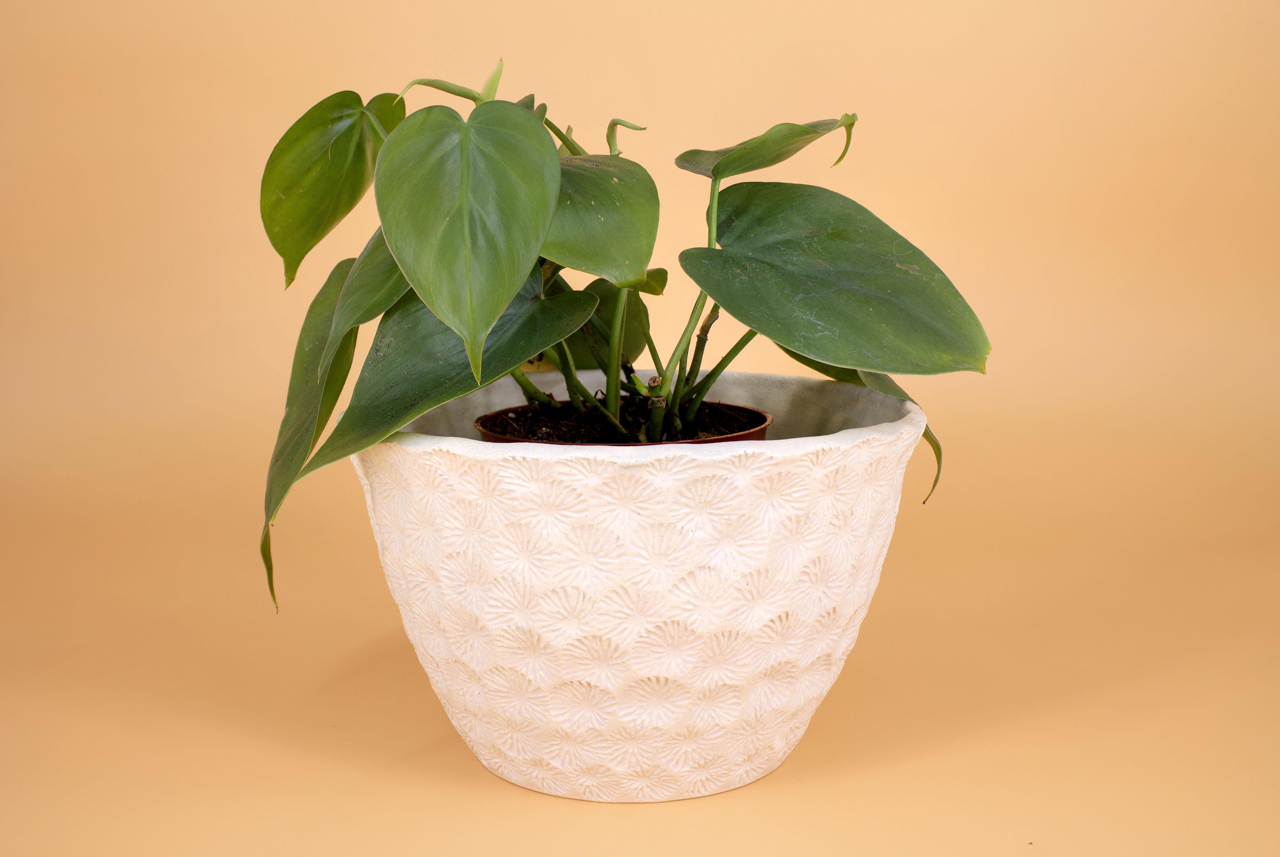White planter, 2020