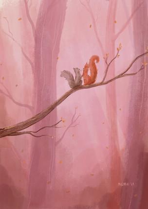Illustratie eekhoorns