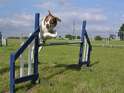 Drift jumping.JPG