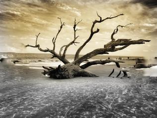"""""""Driftwood Beach"""" by Cherie Heringer"""