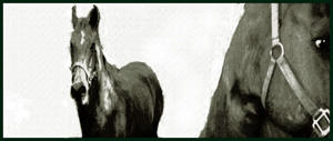 Two Horses by Artemus Blue