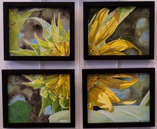 Sunflower Quattuor by John Duke
