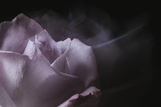 """Lilac Smoke"" by Maggie Dudeck"