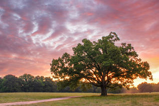 """Dyar Pasture Sunrise"" by Bryan Galgano"