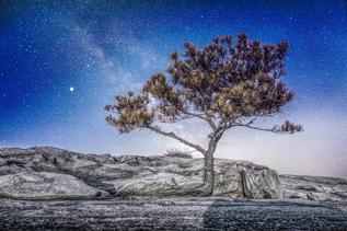 """""""Starry Growth"""" by David Dobbs"""
