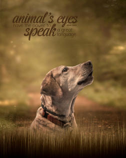 """""""Animal's Eyes"""" by Robert Richardson"""