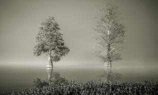 Foggy Morning on Lake Eufaula by Grover Crawford