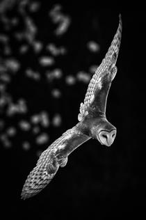 """""""Barn Owl Contrails"""" by Traci Dickson"""