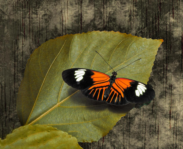 Doris Longwing by Robert Richardson
