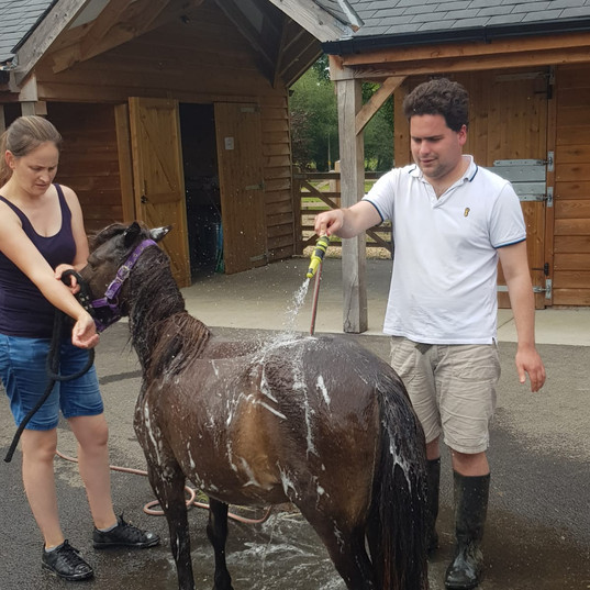ap-washing-shetland-pony-topsy.jpg
