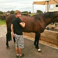 tommy-grooming-horse.jpg