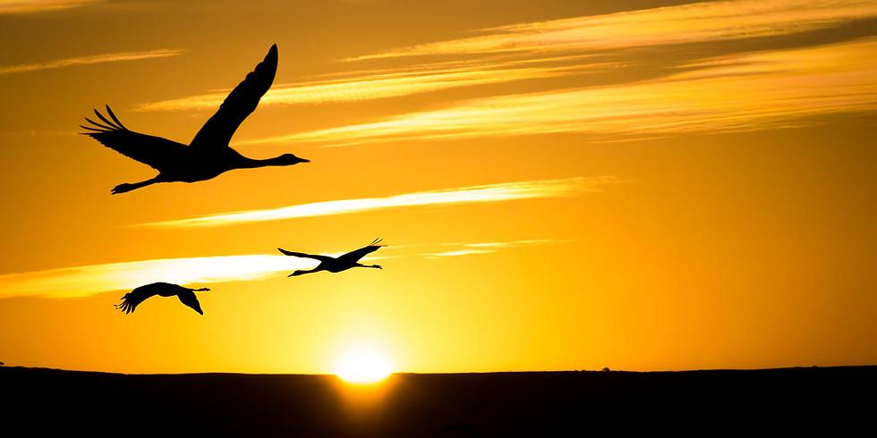 סדנת צילום ציפורים וטבע באגמון החולה (בהנחיית ויקטור זיסלין)