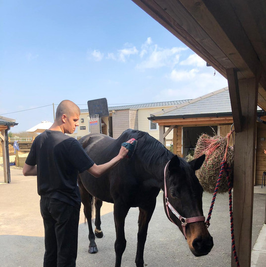 jh-grooming-horse.jpg