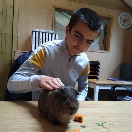 sm-feeding-stroking-guinea-pig.jpg