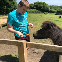 Morgan feeding horse a carrot