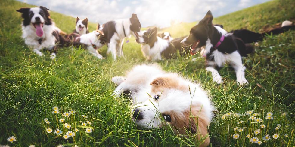 סדנת צילום כלבים בתנועה - אלינור רויזמן