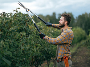 The Importance of Spring Pruning To Allow For Healthy Plant Growth
