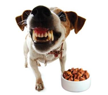 Avoid Food Guarding