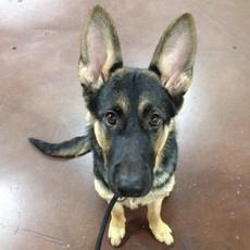 Puppy Training and Exposure Walk