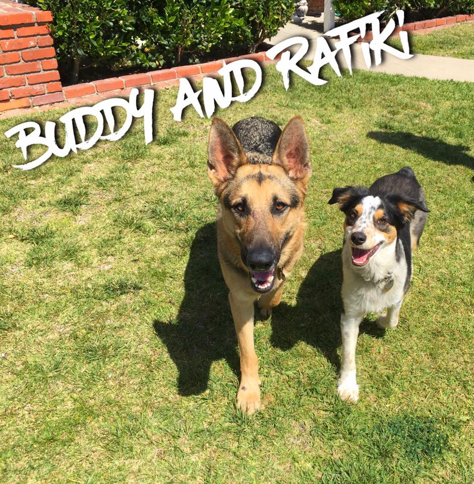 Buddy and Rafiki