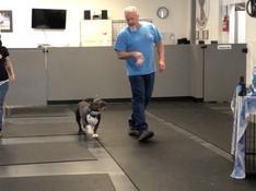 Foundational Dog Training Course