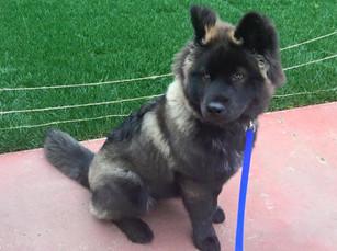 Puppy Training and Walk