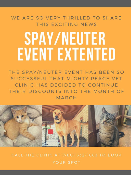 Mighty Peace Veterinary Clinic Extends Spay & Neuter Event