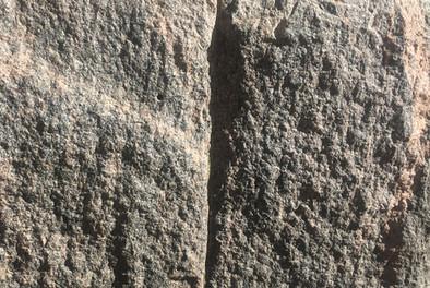 kivi.jpg