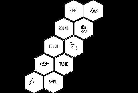 5 senses.png