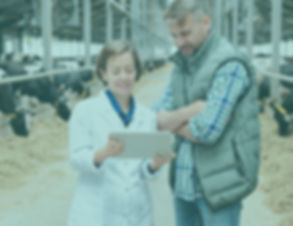 Photo showing a farmer and veterinary reviewing a chart (iStock)