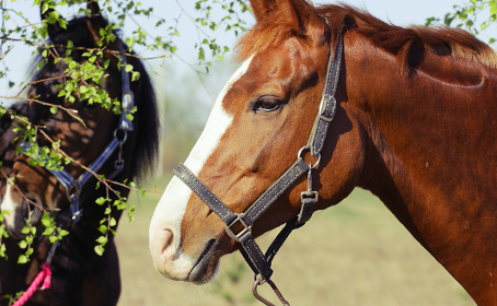 What If It's Equine Asthma?