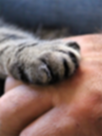 A photo of a cat's paw and a human hand