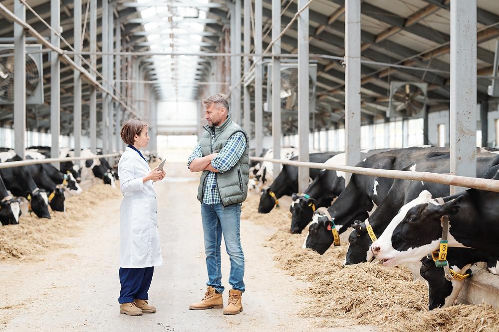 A bovine farmer talking to his veterinarian (iStock)