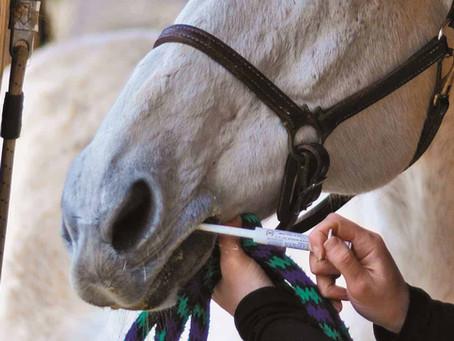 Equine Deworming