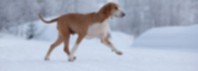 Hound dog walking across snow covered road