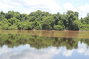 Encontro Rio Miranda com Salobra_