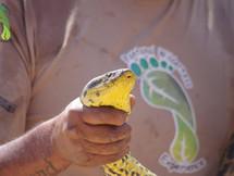 Pantanal Wilderness: Anaconda