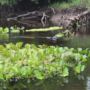 Rio Salobra