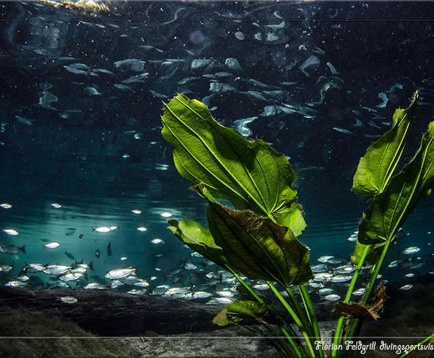 Bioma aquático
