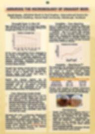 Report 2 Image.jpg