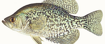 Late-Fall-Crappie-KN_ca-blog-cover-1080x