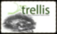 trellis main_edited_edited.png