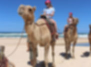 camel safaris.jpg