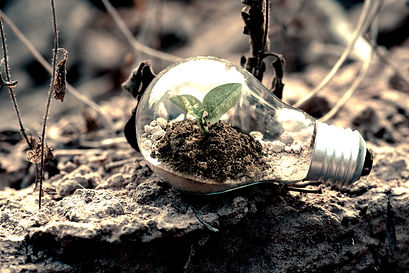 clear-light-bulb-planter-on-gray-rock-11
