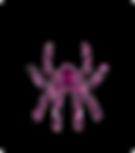 spiderpink_.png