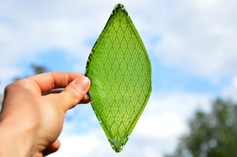 Step Aside Trees, We Have A New Leaf